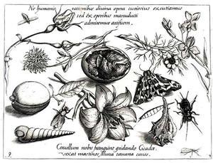 Ei met kuiken, bloemen, schelpen, een mot en andere insecten