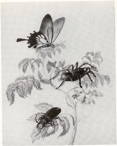 Plant uit de trompetboomfamilie met vogelspin, vlinder en kever