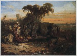 Gevecht tussen een tijger een een buffel