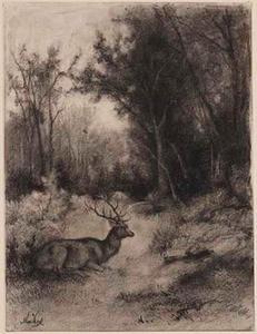 Rustend hert in boslandschap