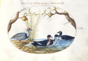 Drie eenden en een fabeldier [eend met vier poten]
