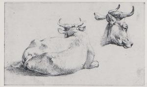 Liggende koe; een koeienkop