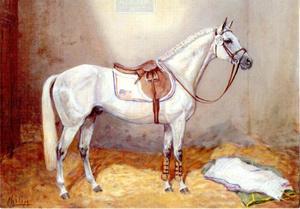 Abdullah (Trakehner)