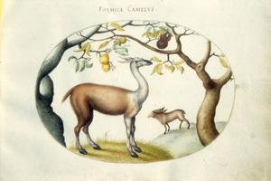 Twee antilopeachtigen, staand op heuveltjes onder vruchtbomen