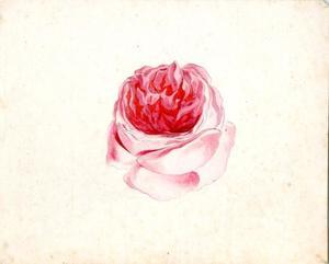 Studie van een roos