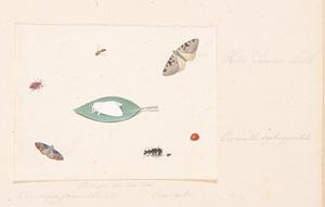Zeven insecten waaronder vlinders en een lieveheersbeestje