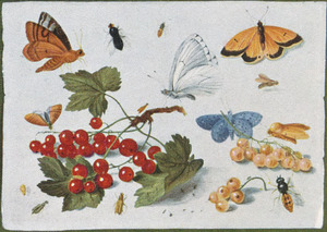 Studie van insecten rondom een takje met rode aalbessen, op een witte ondergrond