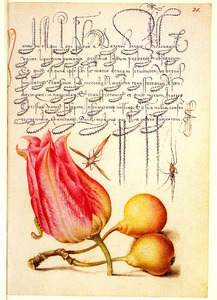 Tulp, twee peren, een rups en twee insecten