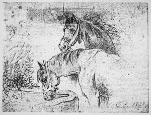 Drinkende paarden