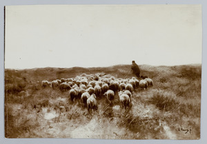 Gaande schapen