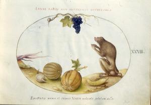Druiventros, slak, aap [baviaan?], pompoen, kool en andere groenten