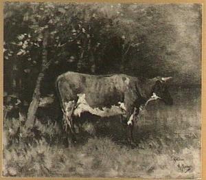 De bruine koe