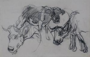 Koeienstudies