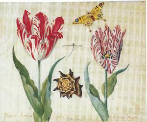 Twee tulpen (Marcús Aúrelliús Aúgústús en A van der púl) met een waterjuffer, schelp en een koninginnepage