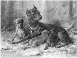 Duitse dwergpincher met drie jongen