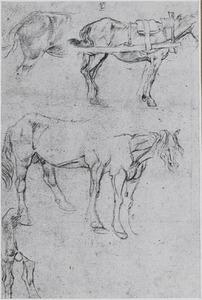 Studies van paarden