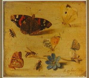 Studie van verschillende vlindersoorten, andere  insekten en twee bloemen