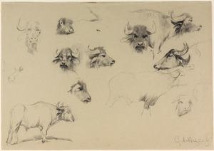 12 studies van (uitheemse) runderen