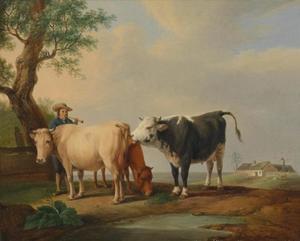 Drie koeien met een boer in de wei