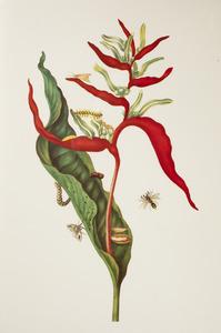Naaldheliconia met snuitmotsoort, zuidelijke zwermrups en wesp