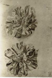 Twee franse rozen