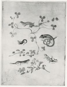 Hagedissen, salamanders, insecten en planten