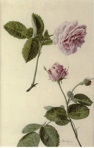 Studie van rozen