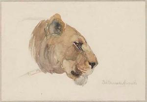 Kop van een leeuwin