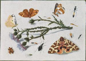 Studie van insecten rondom een takje van een distel, op een witte ondergrond
