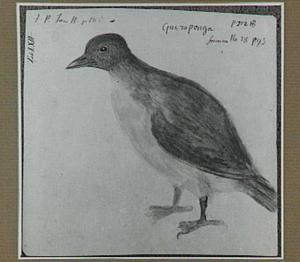 Guiraponga of Atinga (Braziliaanse vogel)