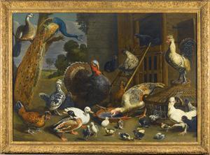 Hoenderhof met pauwen, kalkoenen, kippen en eenden