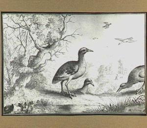 Heuvellandschap met vogels bij een beek
