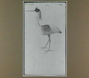 Çocoi (Braziliaanse vogel)