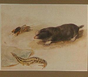 Mol, veenmol en slak