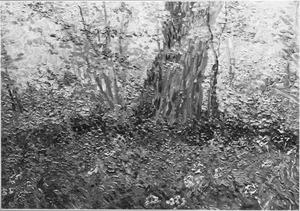 Begroeiing in een bos