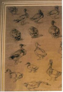 Schetsblad met eenden