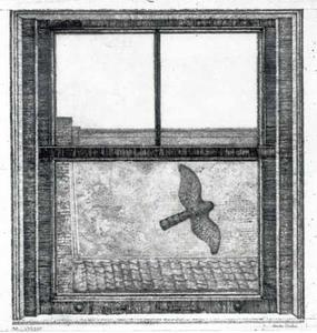 Sperwer vliegt langs het raam