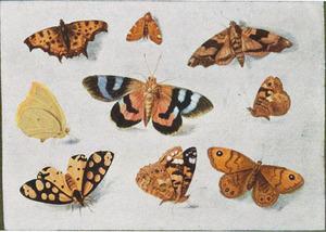 Negen vlinders