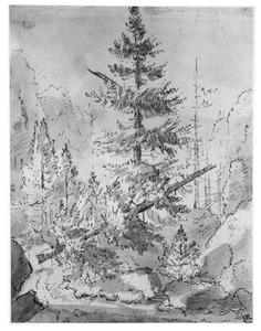 Berglandschap met omgevallen denneboom