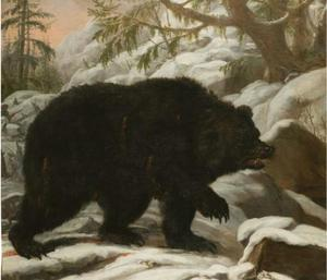 Een beer
