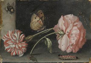 Roos, anjer en insecten