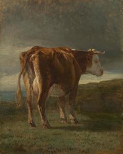 Rood-en-wit koe