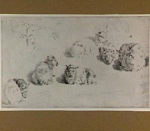 Studies van schapen en lammeren