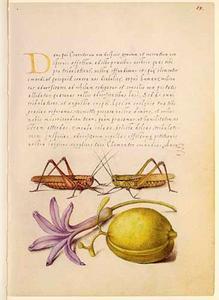 Hyacint, amandel en twee sprinkhanen