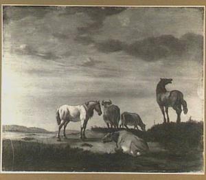 Paarden en koeien in een weiland