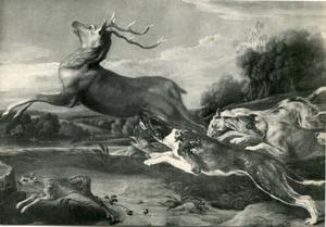 Honden vallen een damhert aan, een jong hert vlucht ongezien weg
