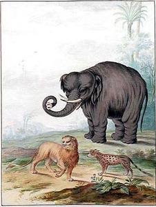 Indische olifant, leeuw en een civetkat in een landschap