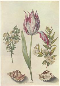 Tulp, geflankeerd door takjes myrte en twee schelpen