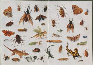 Studie van insecten, twee hagedissen en een salamander