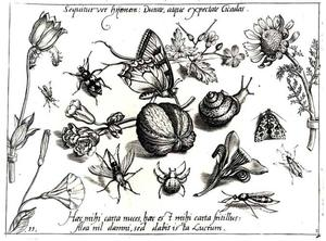 Walnoot, vlinder, slak, spin en andere insecten en enkele bloemen